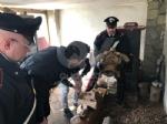 RIVOLI - Traffico illegale di specie animali protette: sequestrate 10 tartarughe ad un 46enne - immagine 4