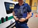 BORGARO - Un Fiat Qubo e le body-cam: ecco le novità per la Polizia Locale - immagine 4