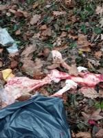 GIVOLETTO - Giallo in strada degli Anterei: animale scuoiato e chiuso in un sacco nero FOTO - immagine 4