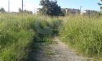 VENARIA - La segnalazione: «Ecco il degrado di Corona Verde» - immagine 4