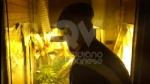 """RIVOLI - In casa una serra per produrre cannabis """"bio"""": tre rivolesi in manette FOTO E VIDEO - immagine 4"""