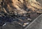 RIVOLI-GRUGLIASCO - Idioti in azione: bruciato il «villaggio felino» e alcuni alberi - immagine 5