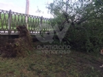 VENARIA-BORGARO-CASELLE-MAPPANO - Maltempo: tetti scoperchiati e alberi abbattuti - immagine 5