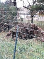 VENARIA - MALTEMPO: Parte la conta dei danni. Sopralluogo del sindaco in tutta la città - immagine 9
