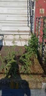 VENARIA - Muri pericolanti ed erba alta: degrado nel campo «naturale» del Don Mosso - immagine 5
