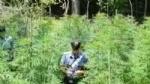 """RIVOLI - In casa una serra per produrre cannabis """"bio"""": tre rivolesi in manette FOTO E VIDEO - immagine 5"""