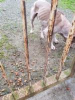 CASELLE - Abbandonati, senza cibo da venti giorni e feriti: salvati due cani - immagine 6