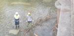 VENARIA - La Protezione Civile pulisce e mette in sicurezza il Ceronda - LE FOTO - immagine 6