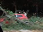 MALTEMPO - Albero e una insegna crollati sulle auto, strade allagate - immagine 6