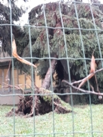 VENARIA - MALTEMPO: Parte la conta dei danni. Sopralluogo del sindaco in tutta la città - immagine 10