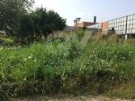 VENARIA - Moderati, Pd e Forza Italia: «Lerba è altissima. La città è una giungla» - immagine 7