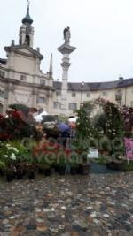 VENARIA - «Festa delle Rose»: un successo a metà per colpa della pioggia - immagine 7