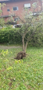 VENARIA-BORGARO-CASELLE-MAPPANO - Maltempo: tetti scoperchiati e alberi abbattuti - immagine 17