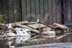 GRUGLIASCO - Grazie alle telecamere scovati 32 «furbetti dei rifiuti» - FOTO - immagine 8