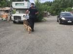 CAMPO NOMADI - Maxi blitz dei carabinieri contro roghi tossici e furti: 14 arresti - FOTO E VIDEO - immagine 8