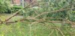 VENARIA-BORGARO-CASELLE-MAPPANO - Maltempo: tetti scoperchiati e alberi abbattuti - immagine 18