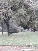 VENARIA - MALTEMPO: Parte la conta dei danni. Sopralluogo del sindaco in tutta la città - immagine 12