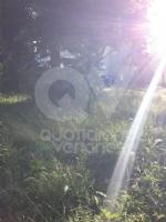VENARIA - Erba alta, scarsa illuminazione e una materna con problemi... - immagine 9