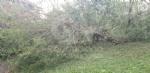 VENARIA-BORGARO-CASELLE-MAPPANO - Maltempo: tetti scoperchiati e alberi abbattuti - immagine 19