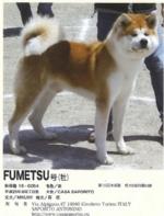 QUATTRO ZAMPE - Il più grande allevamento canino di Akita non si trova in Giappone ma a Givoletto - immagine 1