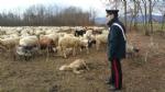 CASELLE - Pecore al pascolo abusivamente: tre pastori denunciati dai carabinieri - immagine 2