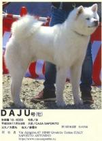 QUATTRO ZAMPE - Il più grande allevamento canino di Akita non si trova in Giappone ma a Givoletto - immagine 2