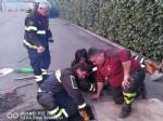 CASELLE - Tre cani incastrati in un tubo rischiano di morire: salvati dai vigili del fuoco - FOTO - immagine 3