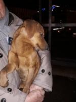 CASELLE - Tre cani incastrati in un tubo rischiano di morire: salvati dai vigili del fuoco - FOTO - immagine 7