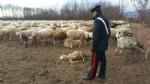 CASELLE - Pecore al pascolo abusivamente: tre pastori denunciati dai carabinieri - immagine 3