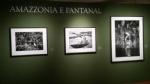 VENARIA - Sebastião Salgado in mostra alla Reggia fino al 16 settembre con «Genesi» - immagine 3