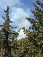 VAL DELLA TORRE-CASELETTE - Incendio boschivo: Aib e pompieri in azione per spegnerlo - immagine 3