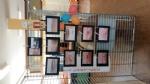 DRUENTO-SAN GILLIO-GIVOLETTO: Successo per la mostra «La scuola, il nostro... tesoro» - immagine 8