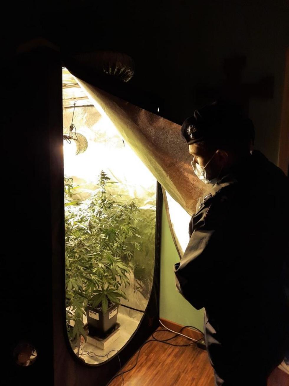 VENARIA - L'abitazione trasformata in piccola serra per coltivare l'amnesia: 43enne in manette