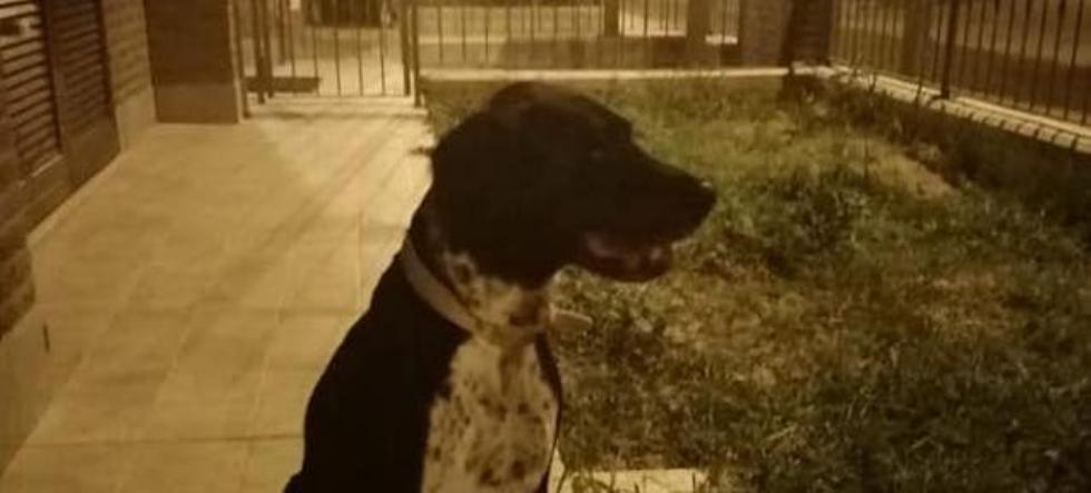 PIANEZZA - Prima la passeggiata e poi la morte: «ci hanno avvelenato il cane»
