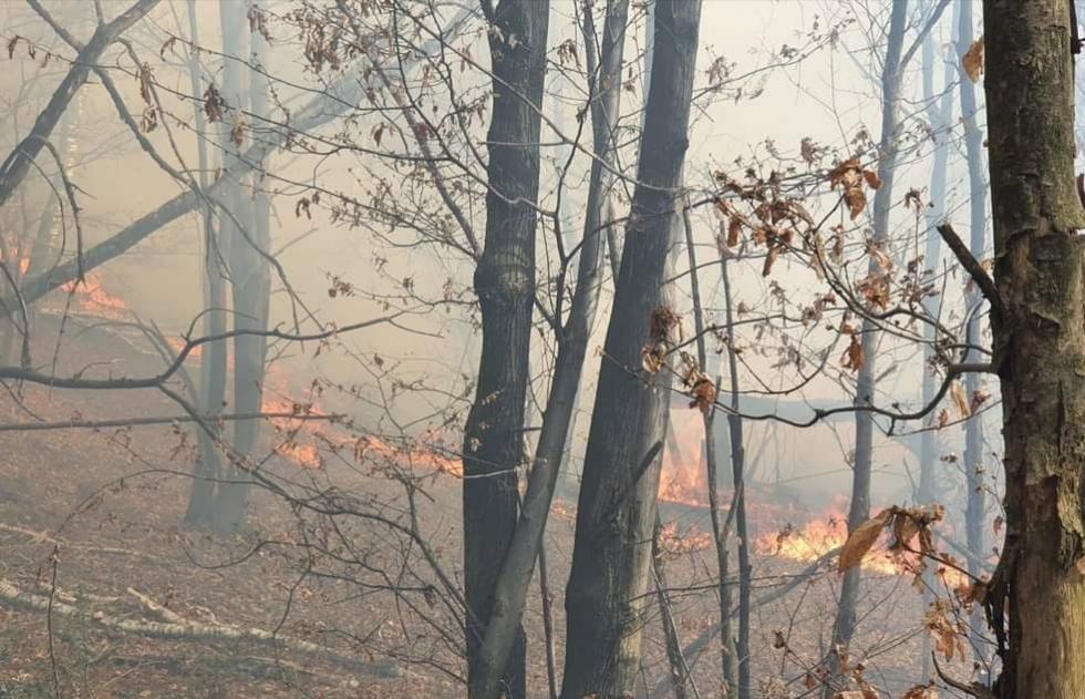 INCENDI BOSCHIVI - La Regione dichiara la fine dello «stato di massima pericolosità»
