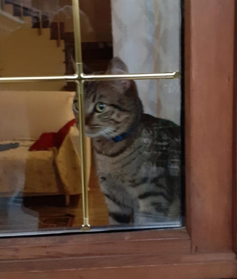 VENARIA - Il gattino Simba è tornato a casa: trovato da un passante in via Boccaccio