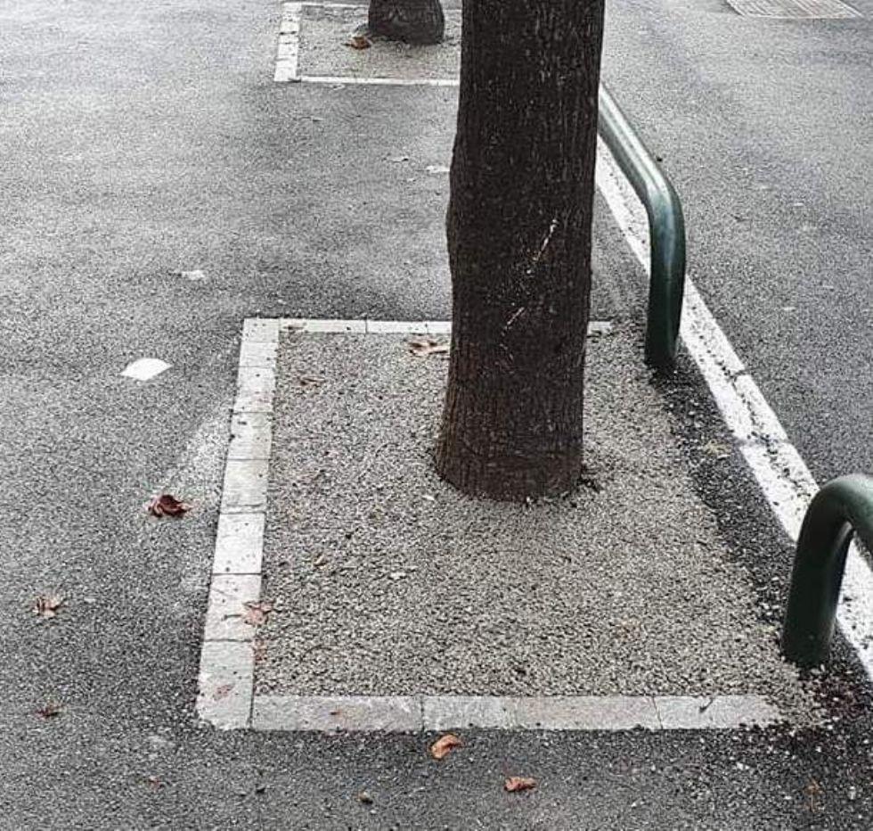 VENARIA - Cemento attorno agli alberi in corso Matteotti? No, è un materiale testato dagli agronomi...
