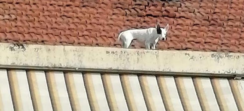 VENARIA - Il cagnolino si fa «un giro» sul tetto: salvato dal volontario di Agriambiente Torino
