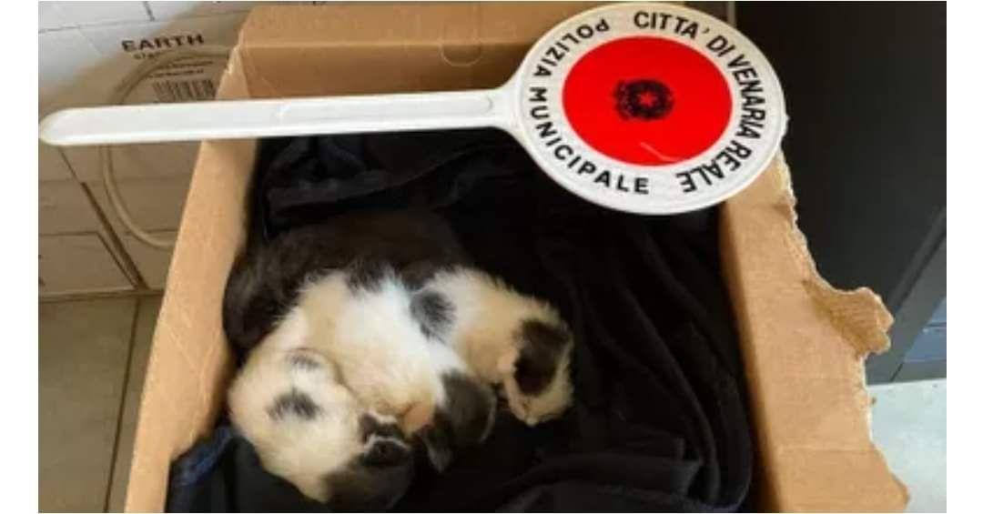 VENARIA - Quattro mici chiusi in una busta di plastica: salvati grazie ad un cittadino. Ora cercano una famiglia
